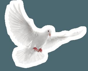 Fantasy Limo Dove